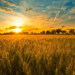 harvest-photo-4